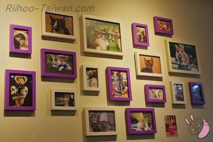 餓店碳烤吐司-壁に飾られた猫の写真の数々